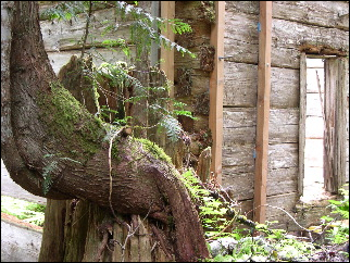 (Twisted tree trunk)